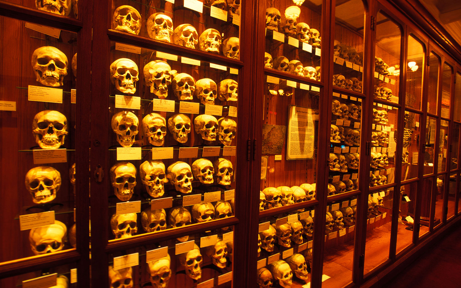 PHILADELPHIA PA COLLECTION OF HUMAN SKULLS ON DISPLAY AT THE MUTTER MUSEUM
