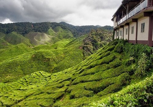 Tea house in Cameron Highlands. Malaysia, 2012.