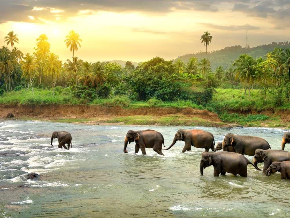 نتيجة بحث الصور عن أودا والاوي عبور الفيلة